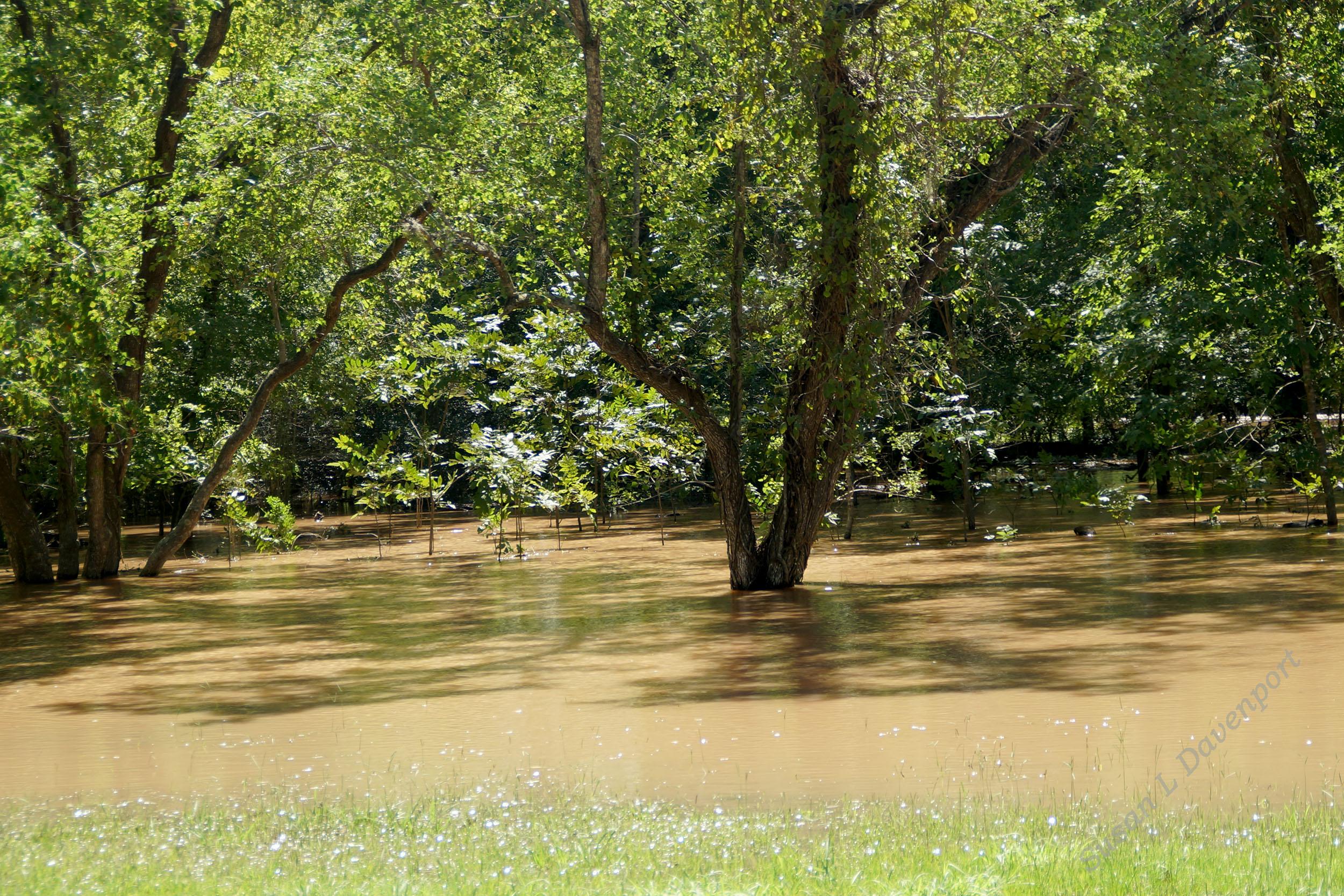 Hurricane Harvey: Flooded Neighbor's Yard