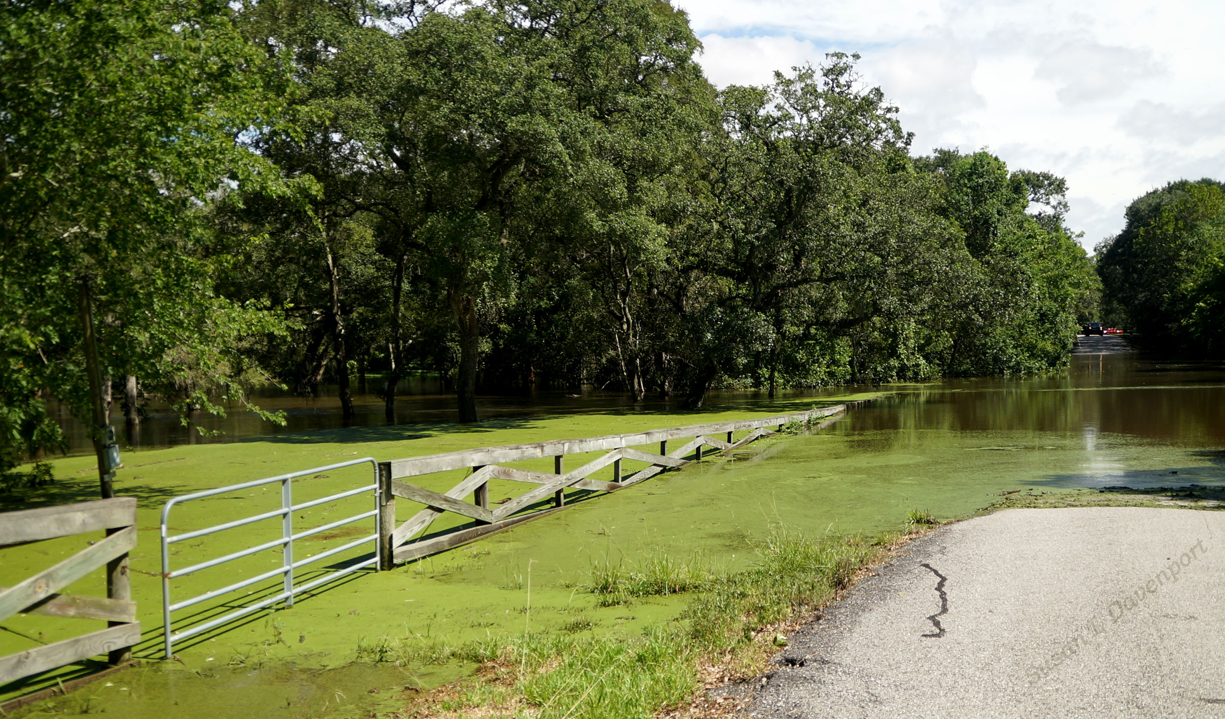 Hurricane Harvey: Flooded Road