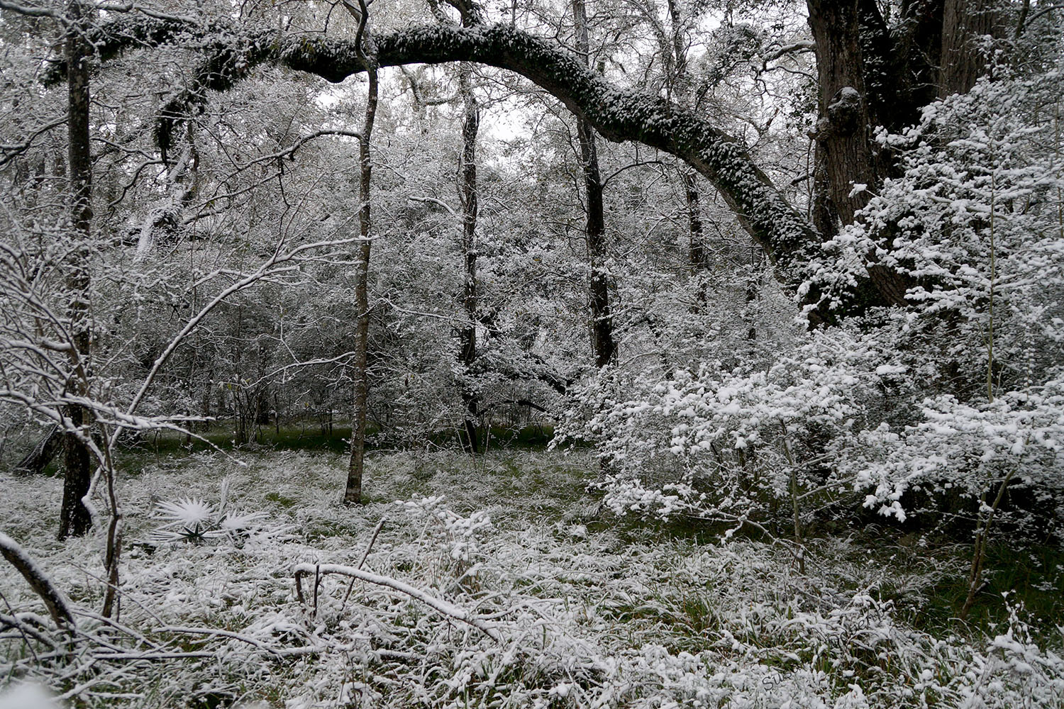 Outlined in Snow - Photo by Susan L. Davenport