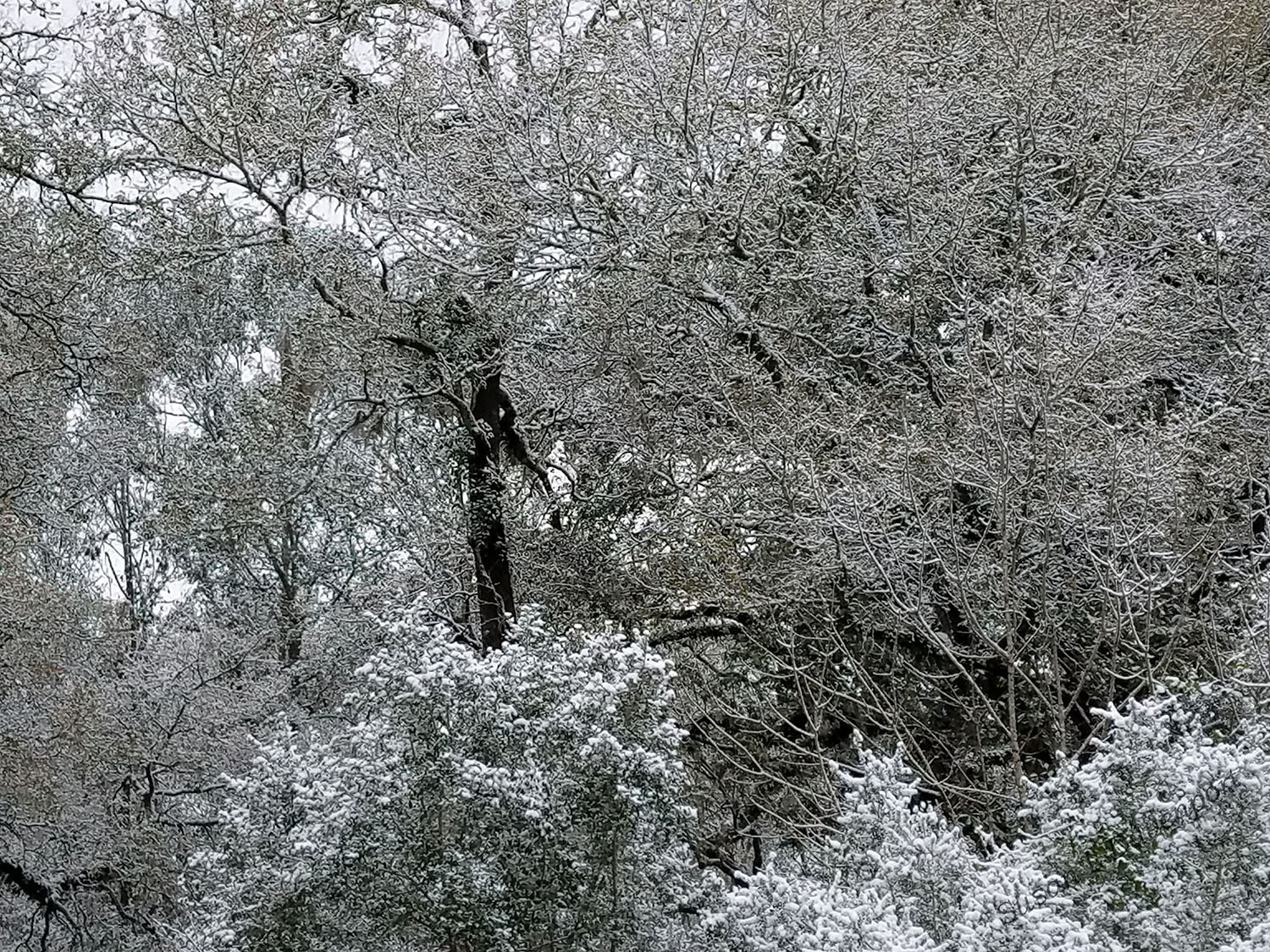 Lacy Branches - Photo by Susan L. Davenport
