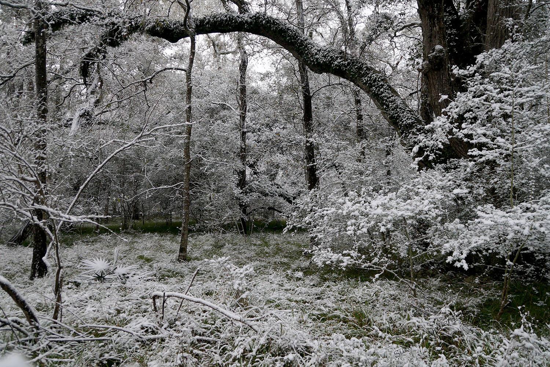 My Backyard: Palmetto Scenic