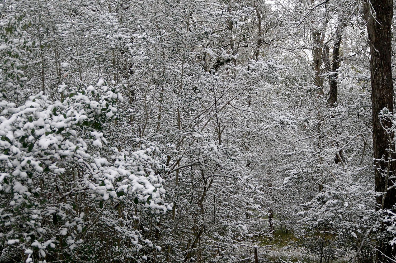 My Backyard: Snowy Woods