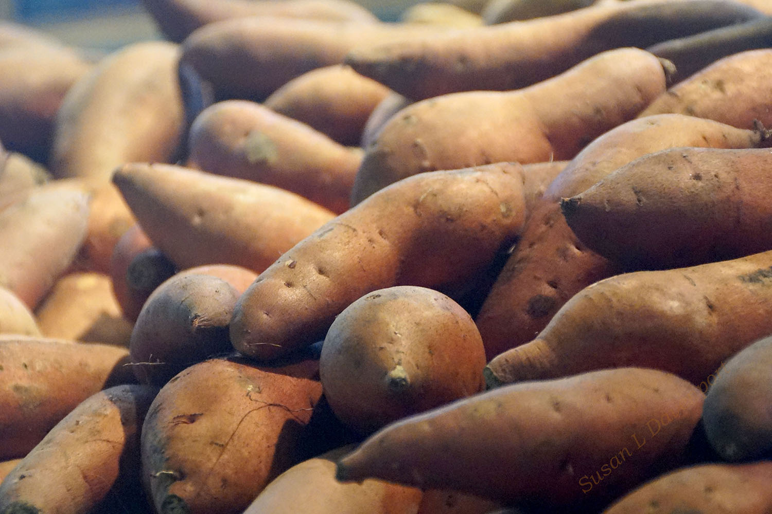 Sweet Potatoes for Less Impact on Blood Sugar - Photo by Susan L. Davenport