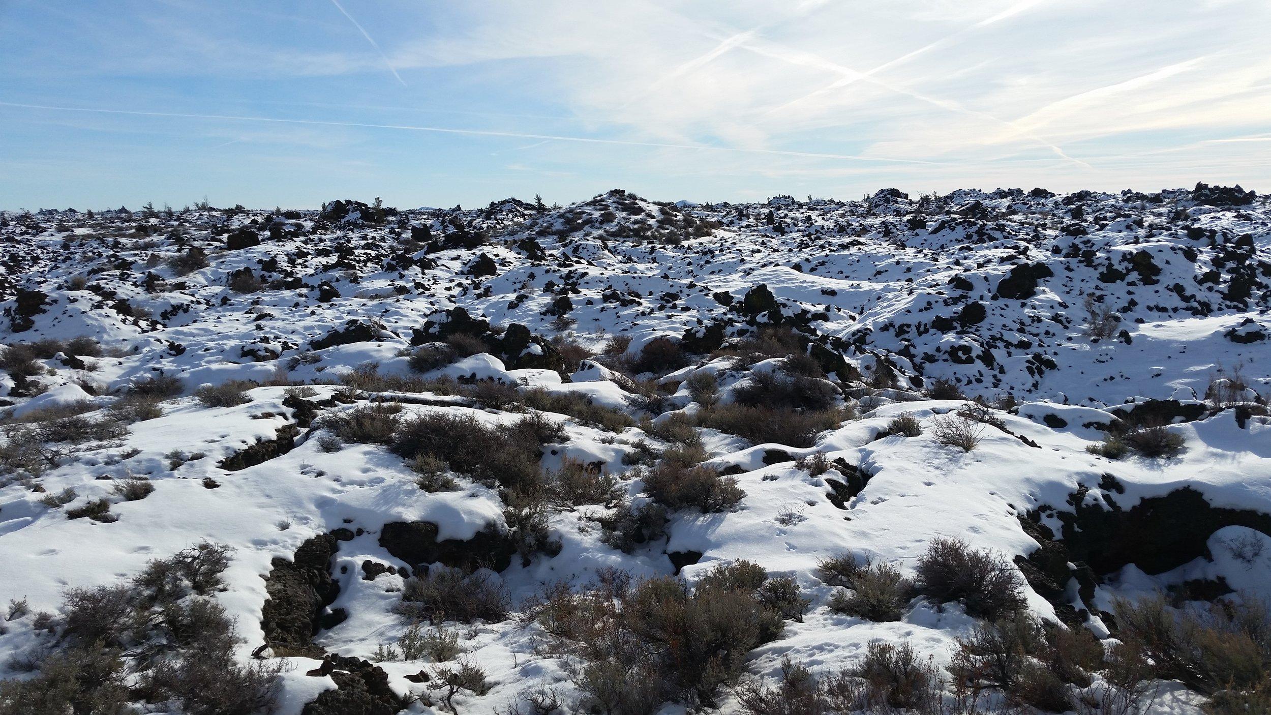 CO_Sagebrush under snow_Seth Gallagher.jpg