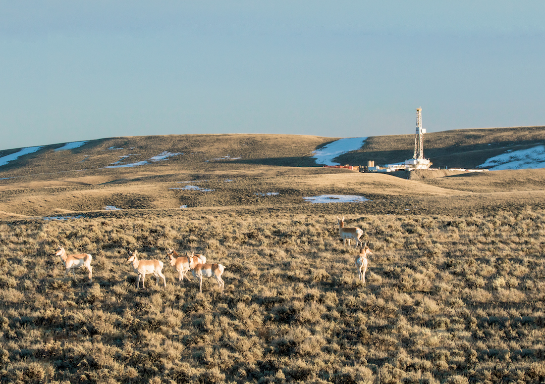 WY_pronghorn and energy_Bryan Nealy, BLM copy.jpg