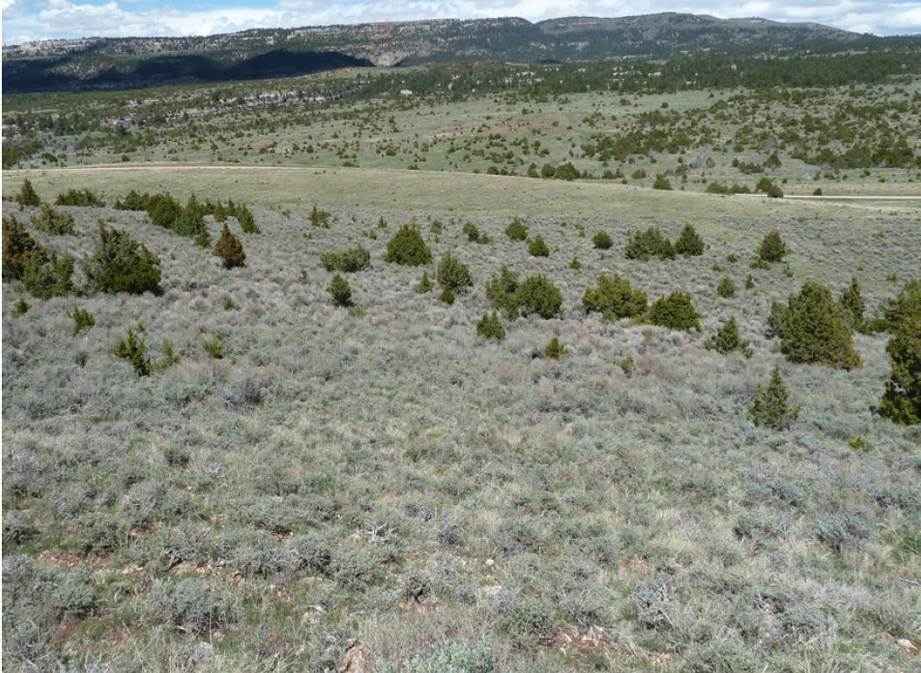 Rome Hill is pictured here before the juniper removal project. Juniper removal was a key part of restoring sagebrush near Rome Hill.