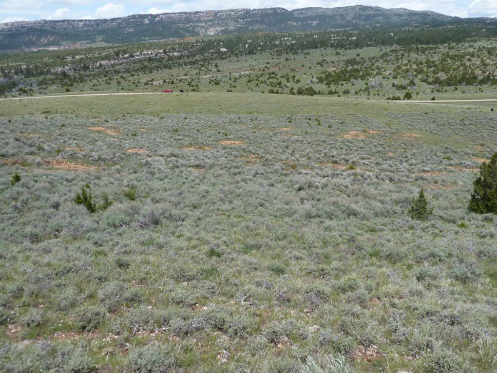 Post treatment: Juniper removal is one step of sagebrush restoration projects. Juniper is aggressive at re-sprouting and the site will need maintenance to prevent it from taking over again.