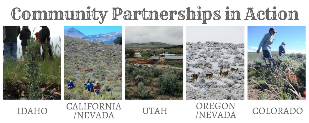 Community Partnerships.png