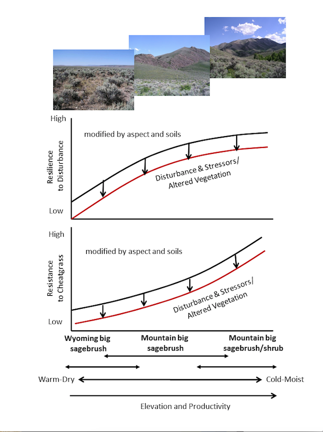 In sagebrush ecosystems resilience to wildfire and resistance to cheatgrass increase over elevation gradients, but are modified by aspect and soils.The relative resilience and resistance of a site are closely related to sagebrush ecological types and soil temperature and moisture regimes. Soil moisture availability and plant productivity increase over elevation gradients resulting in greater recovery potential and more competition with cheatgrass. Also, climate suitability to cheatgrass decreases over these same elevation gradients as soil temperatures decrease. Disturbances that increase soil water and nutrients and reduce competition can decrease both resilience and resistance. Understanding these relationships is useful for determining effective management strategies.