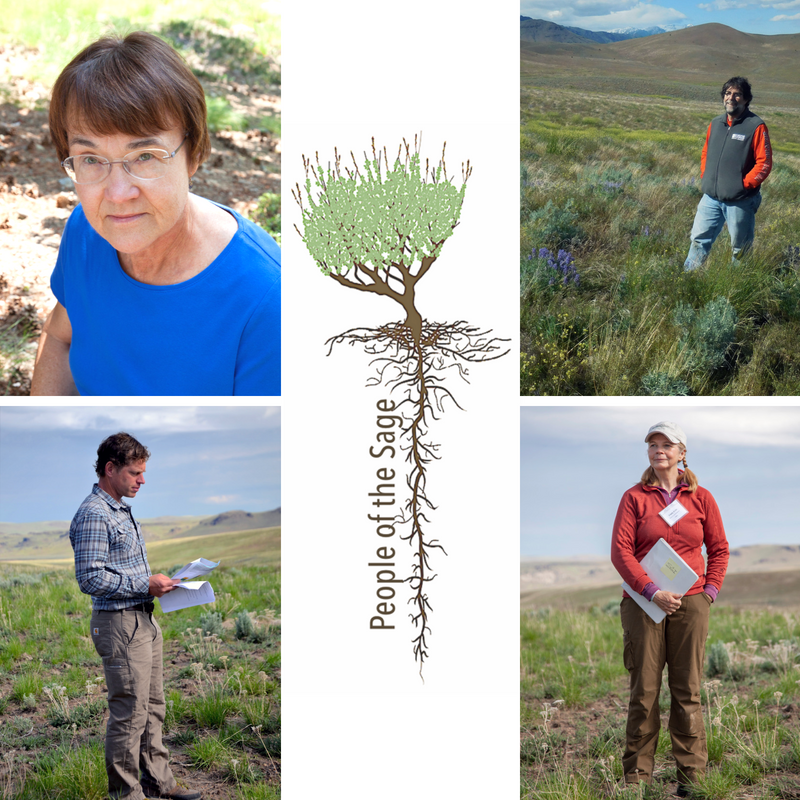 Post-fire Restoration in the Great Basin Webinar - By the Society for Ecological Restoration