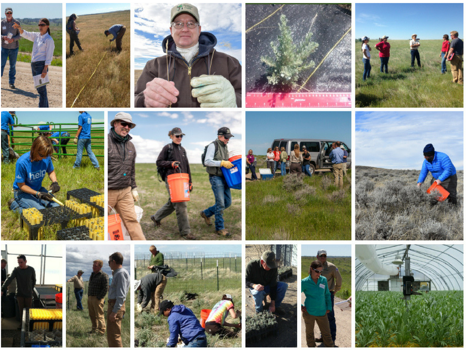 Teamwork & Partnerships Enhance Sage-grouse Habitat in Eastern Wyoming - By Trihydro