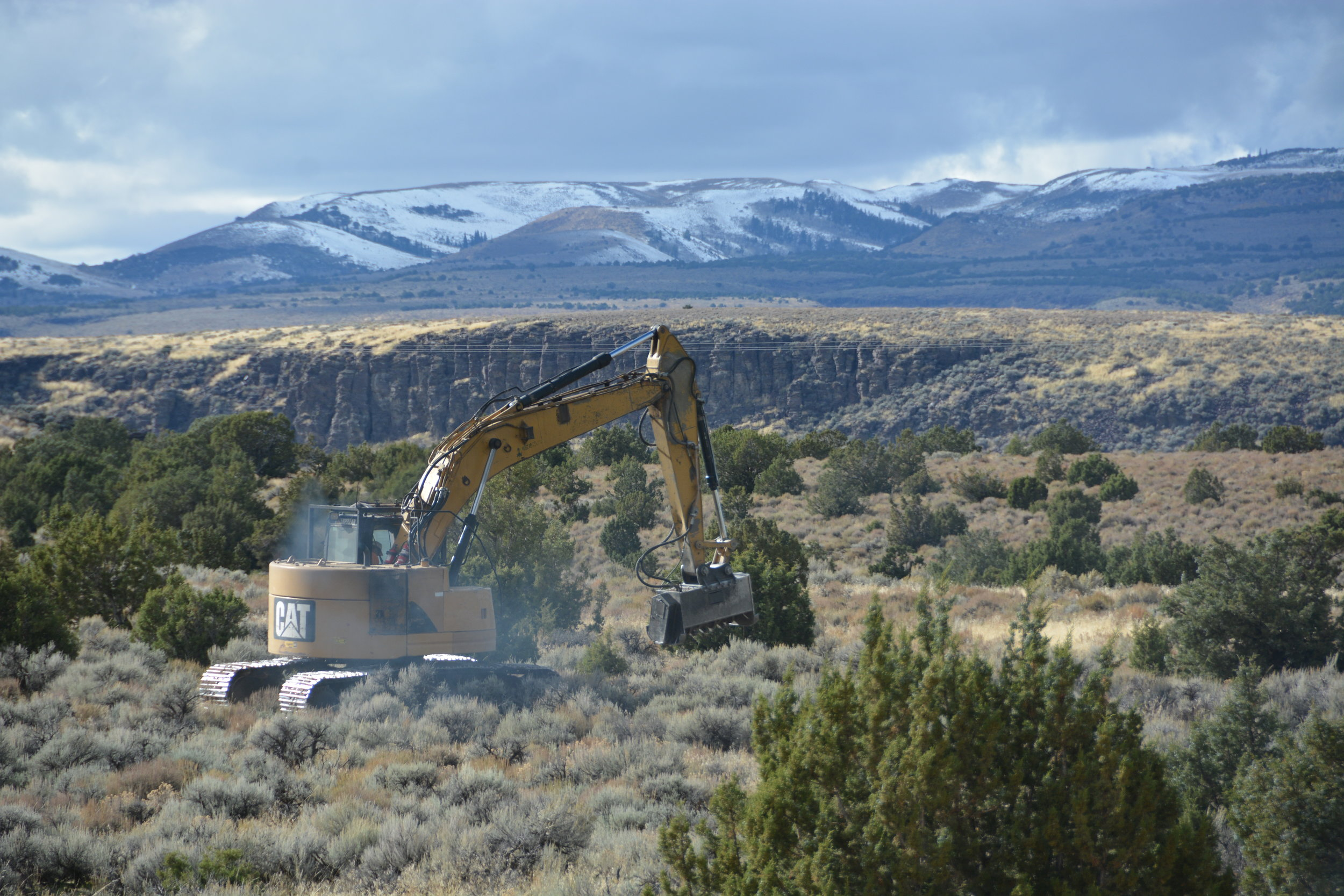 Photo of juniper removal by Connor White