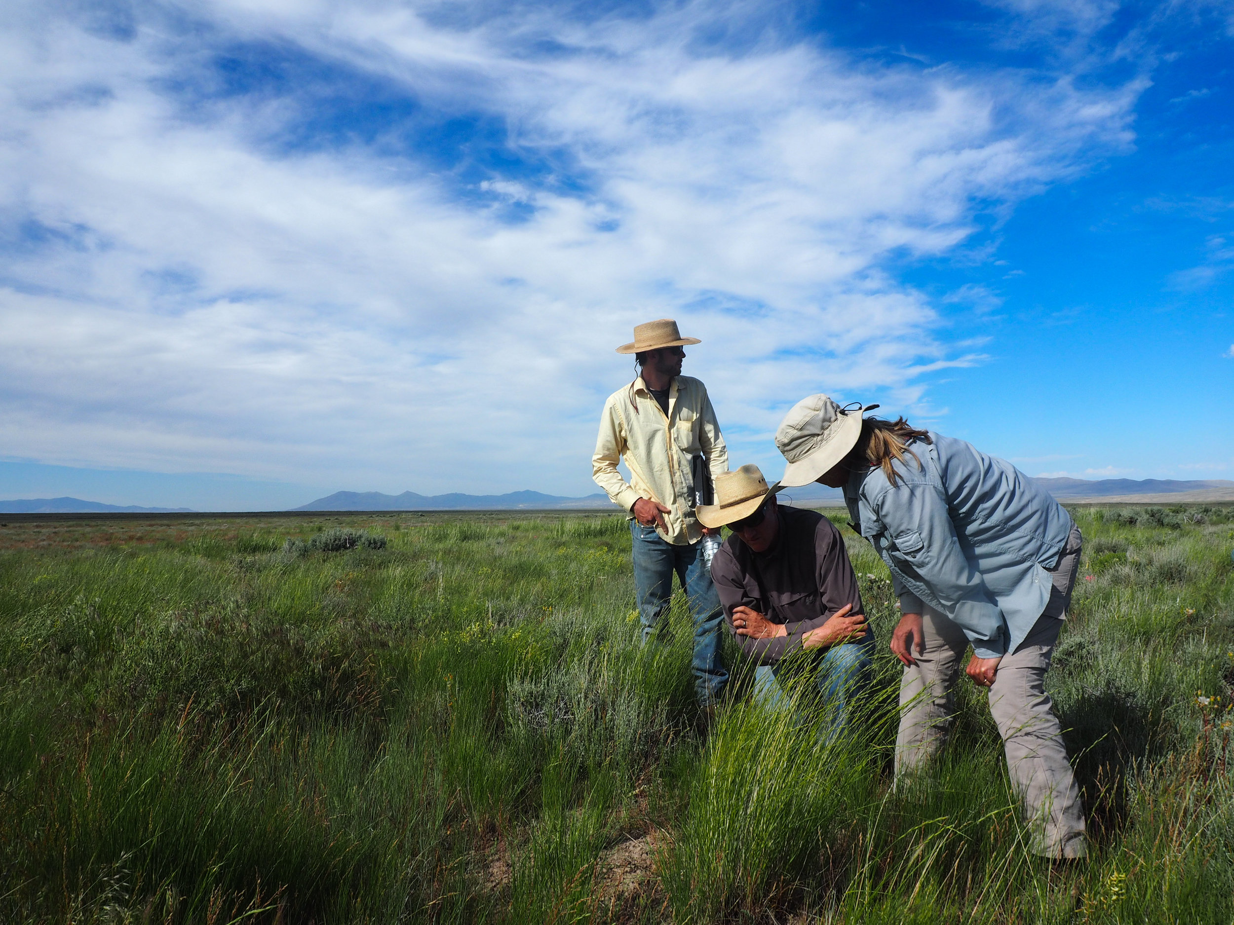 Tamzen Stringham and Lucas Phipps from the University of Nevada-Reno, and James Rogers inspect this site's forage availability.