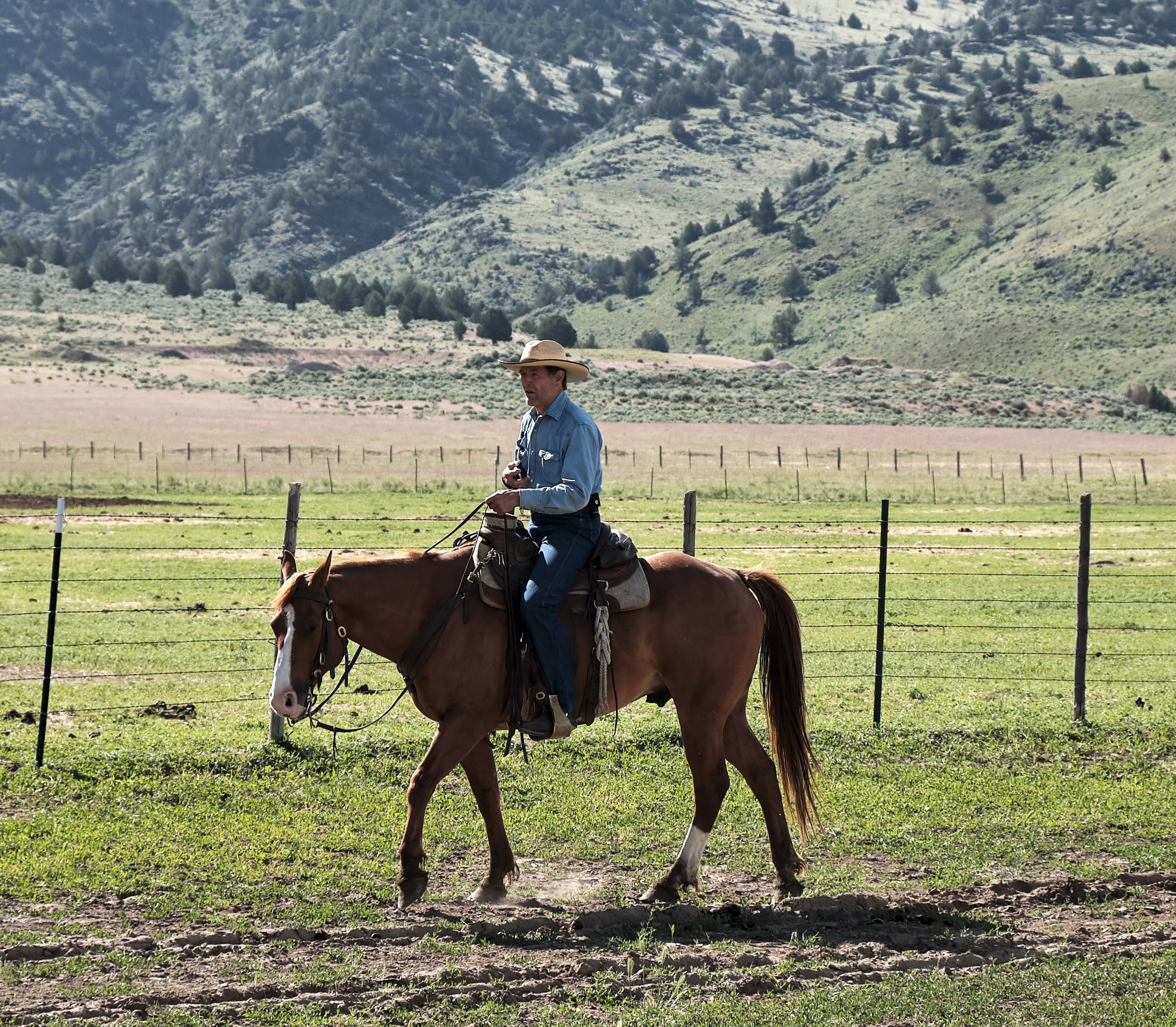 "Whit Hibbard is a rancher and editor of the Stockmanship Journal and he shared this driving analogy as part of the LSLH training held at Roaring Springs Ranch, June 10-14th, 2019. He and Steve Cote, author of the ""Manual of Stockmanship,"" were teaching the principles and techniques of LSLH as developed by the legendary stockman, Bud Williams, to train more manageable cattle that can be used as an effective tool in rangeland management."