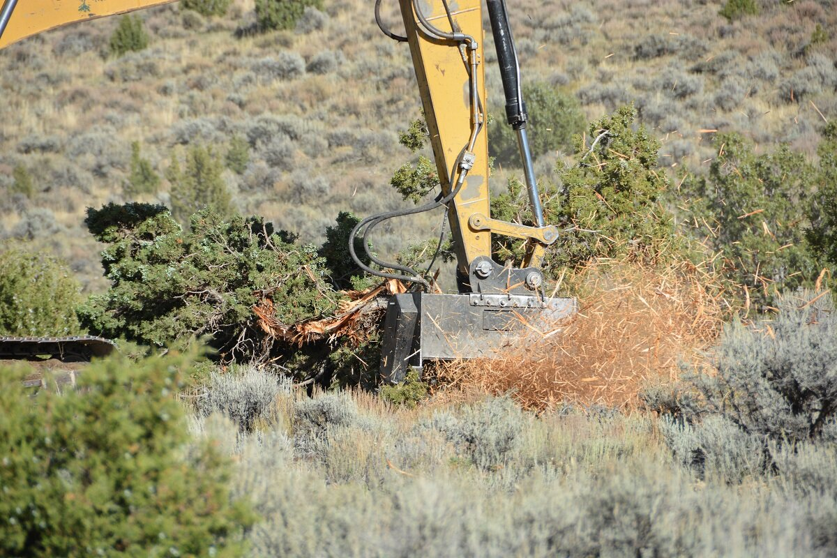Conifer encroachment into sagebrush-steppe is a threat to sage grouse and a significant management challenge. Photo by Connor White.