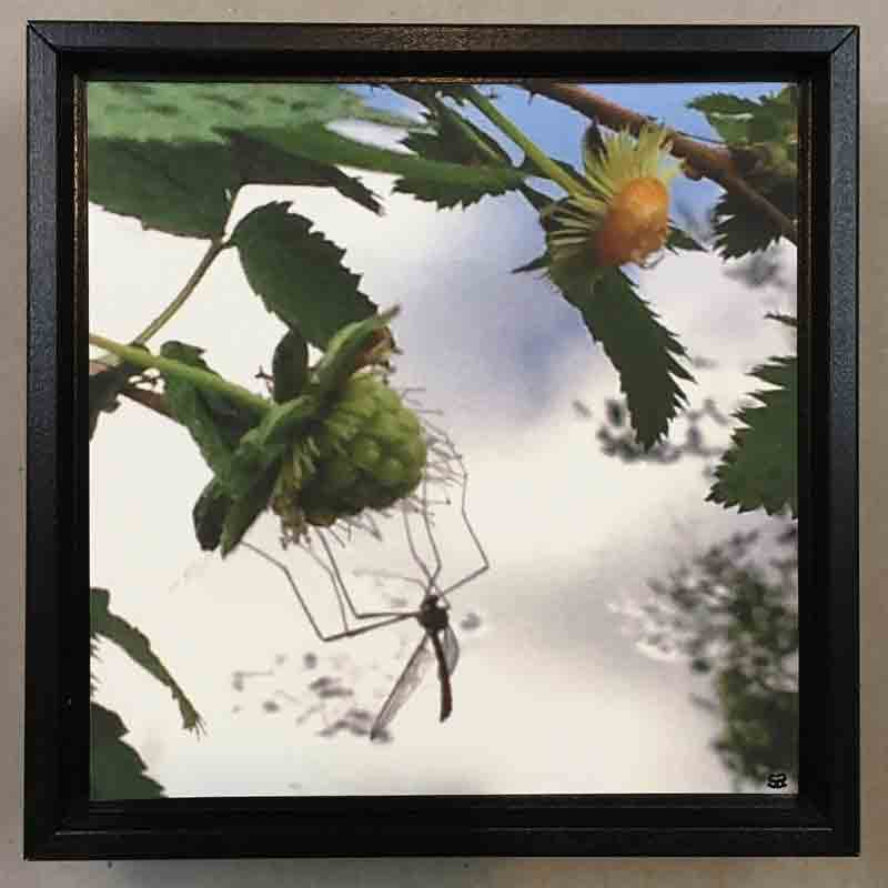 SALMONBERRY INSECT