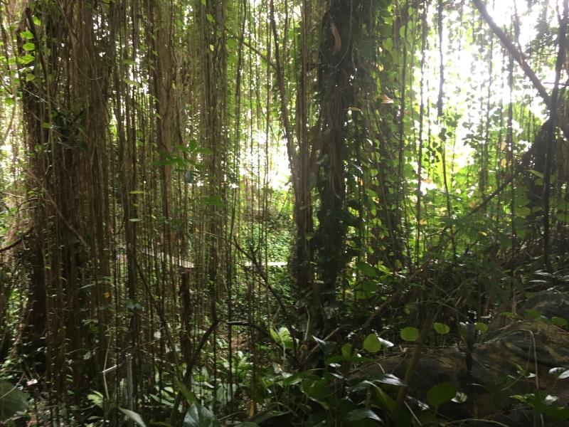 Rainforest Biome (above)                 Ocean Biome (right)
