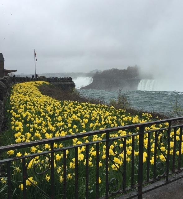 Spring Flowers at top of Niagara Falls