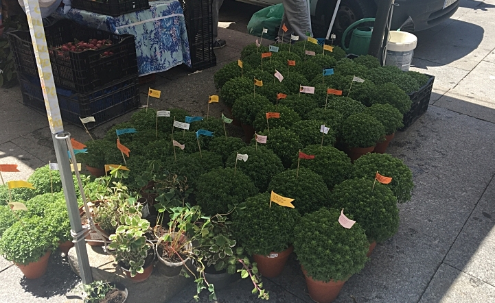 Basil Plants For Sale on Streets