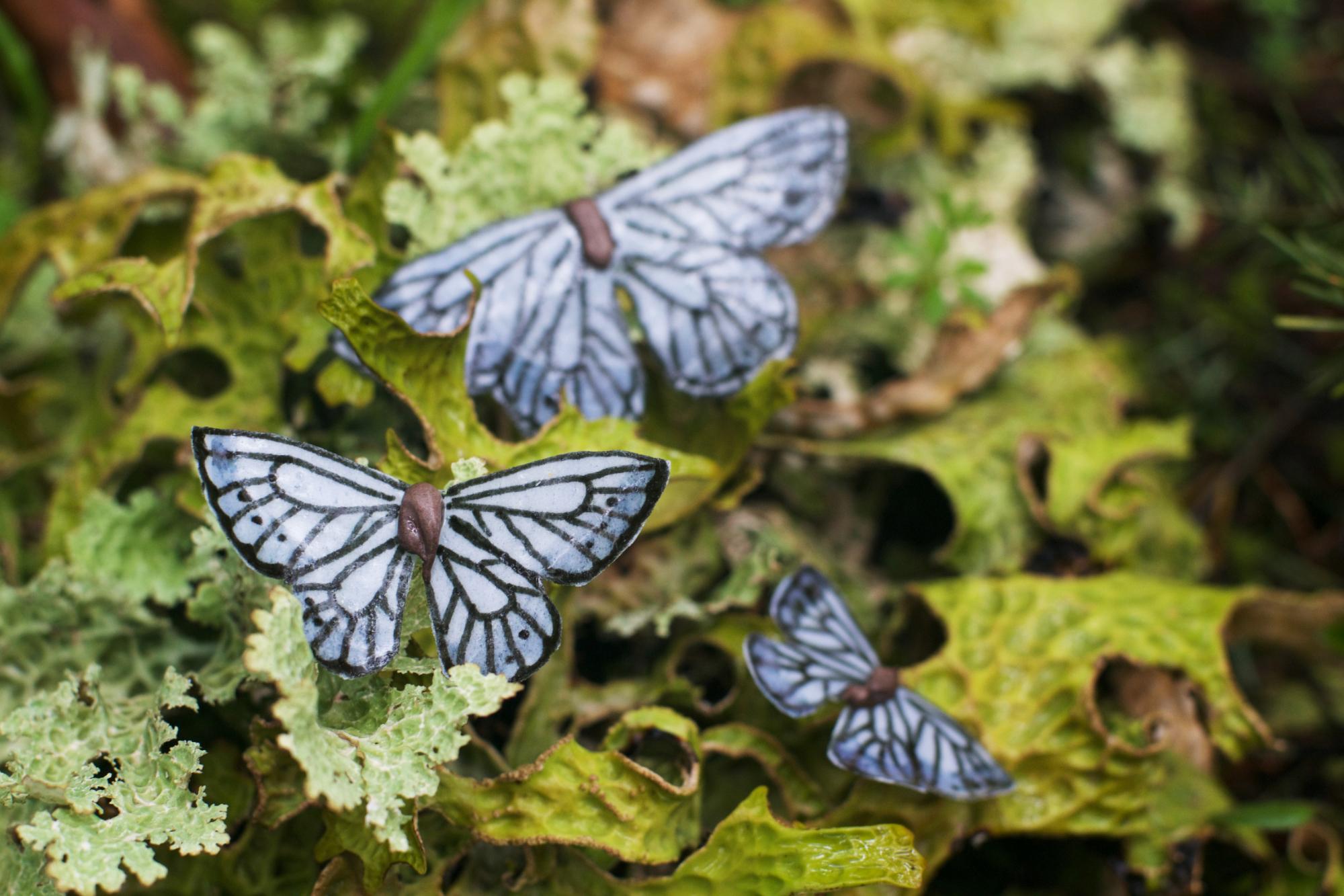 azure edible butterflies small.jpg