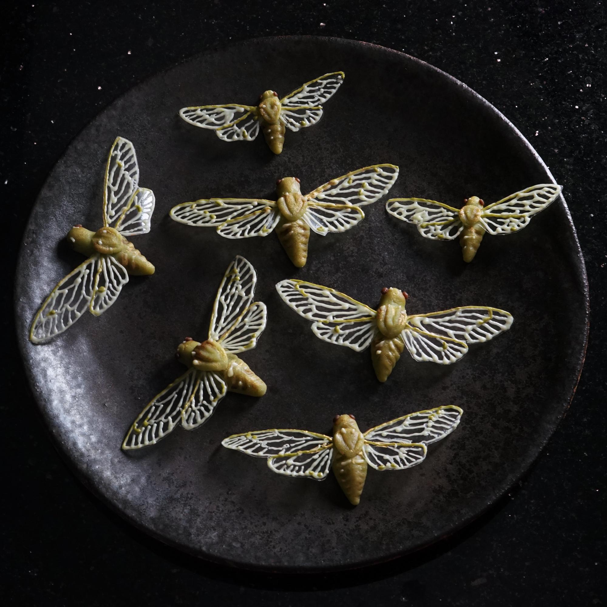 cicadassmall.jpg