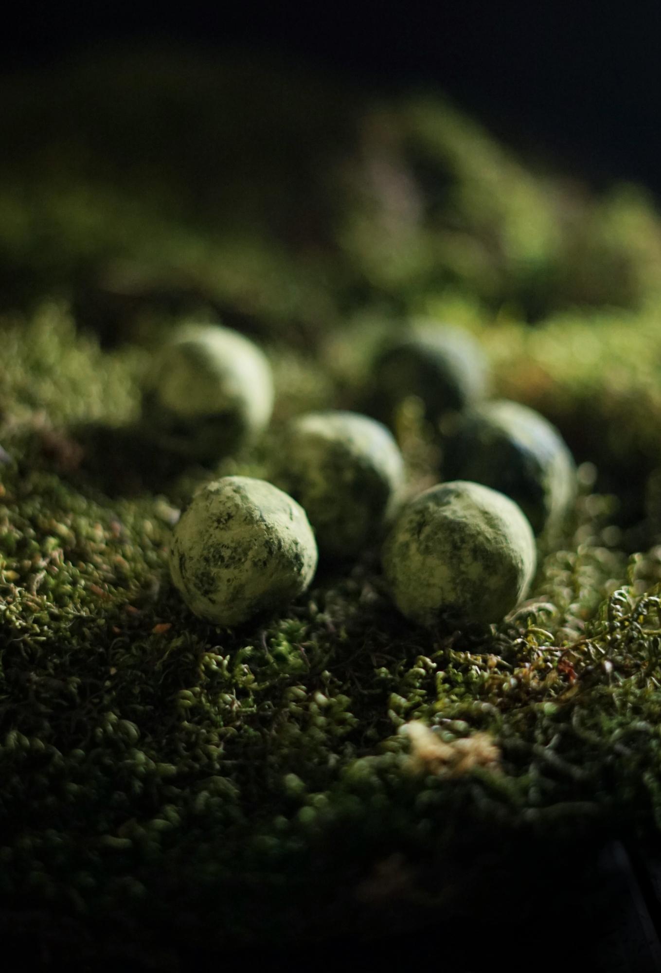 moss truffles 3 small.jpg