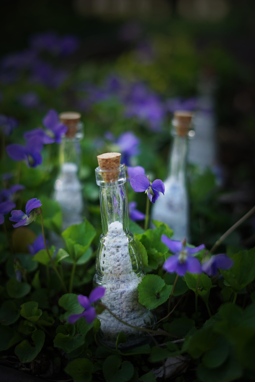 violetsugarsmall.jpg