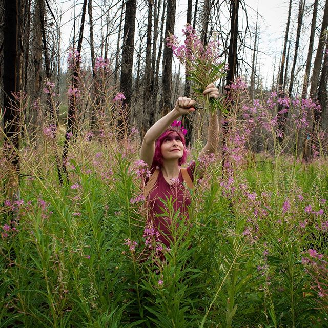 It's been a slow week on social media for me, but many things are bubbling and brewing behind the scenes. I've been focusing my attention on my ash-glazed fireweed cups project, preparing all of my handcrafted pieces to go off to their new homes soon. (This photo of me foraging fireweed is part of that process!) I have also been researching and planning a BIG new project to unveil later this winter! Then there's planning my next event, another magical experience to share with a specific audience. I have also been collaborating with three other wonder-loving women on an incredible class to offer this fall - more hints about that very soon! So many marvelous things on the horizon my toes are wiggling with anticipation. 😊 . ✨✨✨ . And now, the recipe research question of the day: what is your ideal filo pie filling (other than spinach/ spanakopita) ? Tell me in the comments! 💕 . #fireweed #foraging #misswondersmith #thewondersmith #planning #wonder #magic