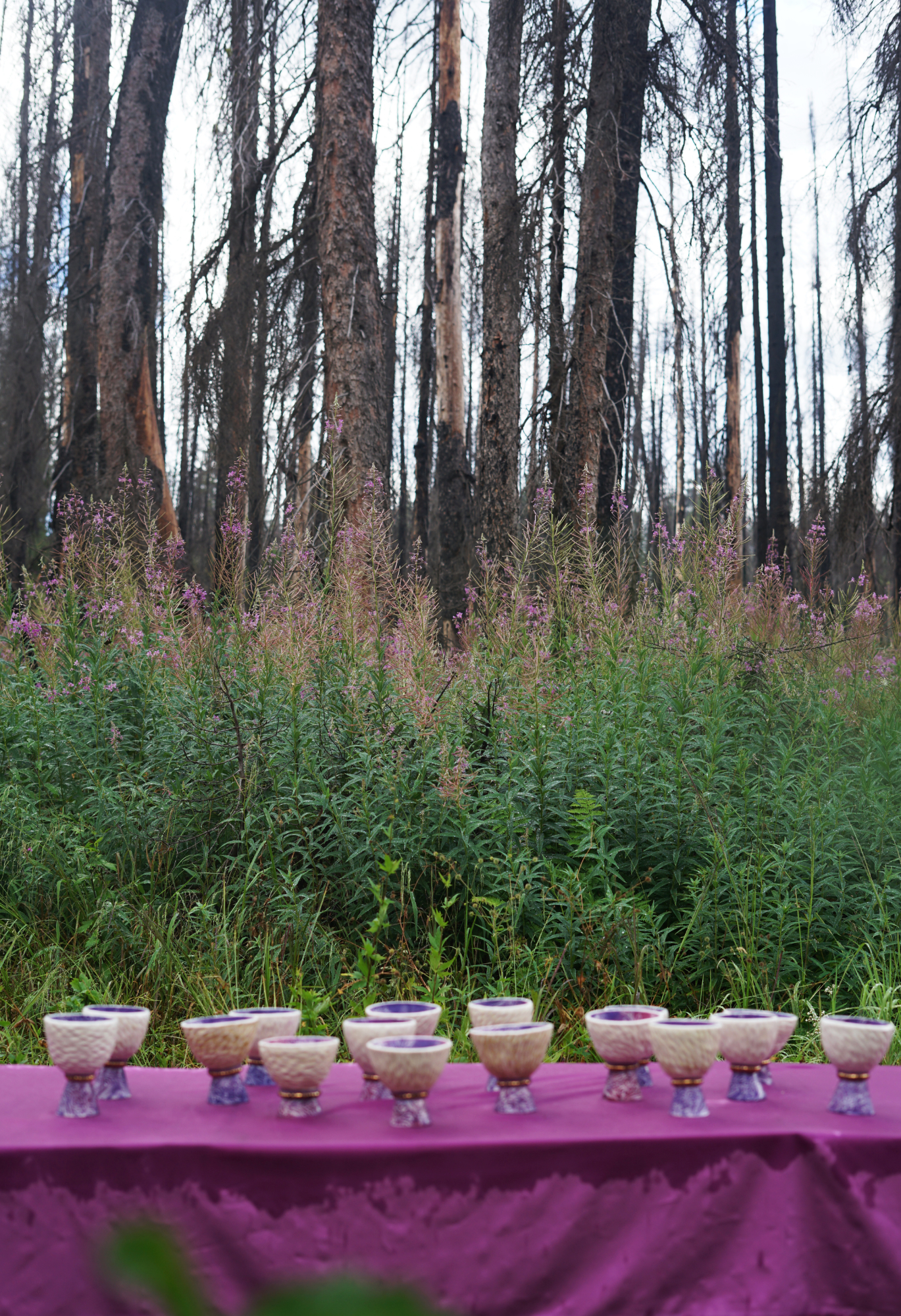 fireweed 2 small.jpg