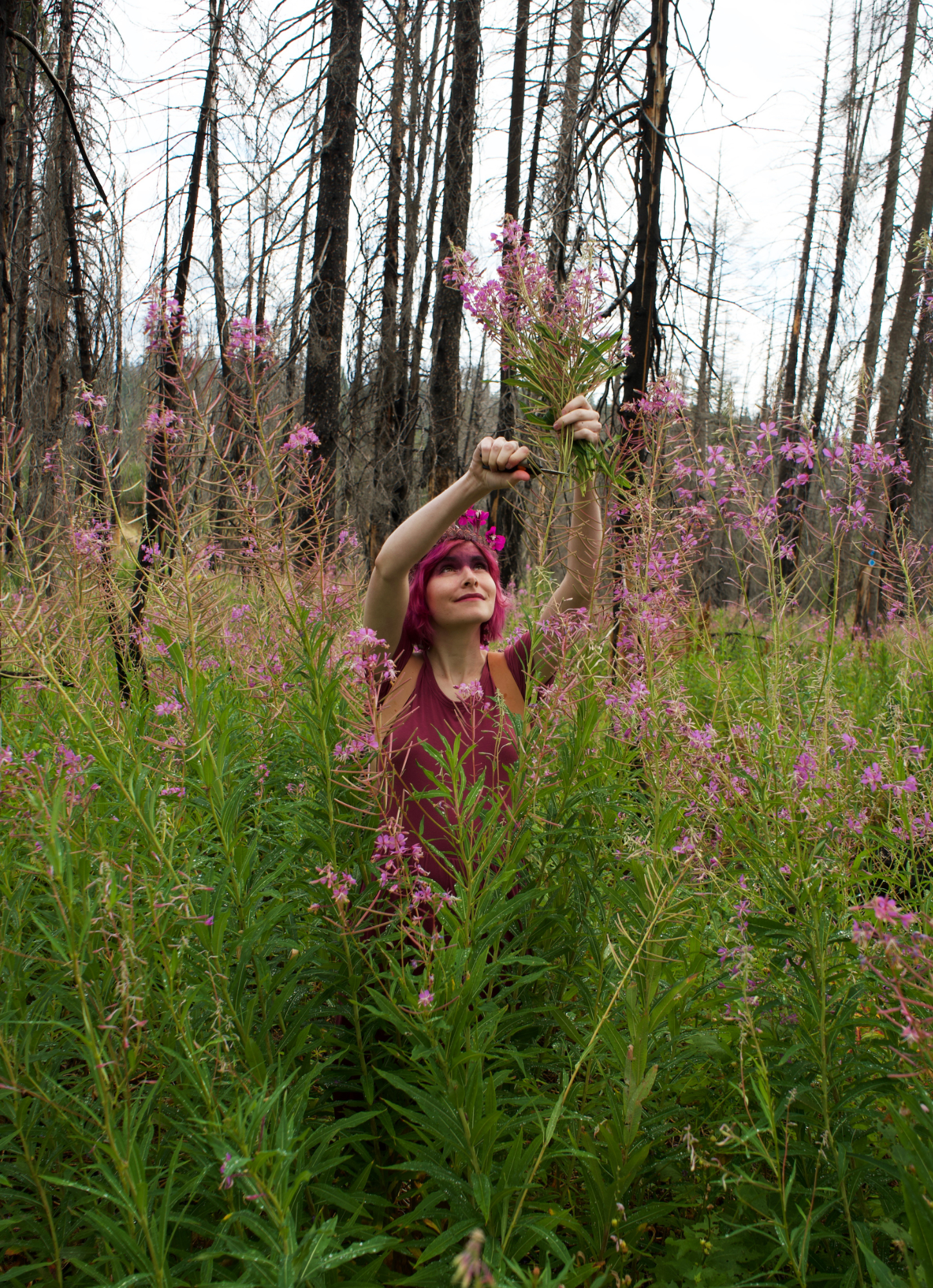 fireweed 16 small.jpg