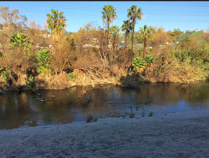 Wild Life along The Los Angeles River near Silver Lake, Echo Park, Los Feliz and Atwater. In the summer months you can sign up for a kayaking and bike riding trip. I loved it, especially when I was the first one in the group to fall into the river and embarrass my son.