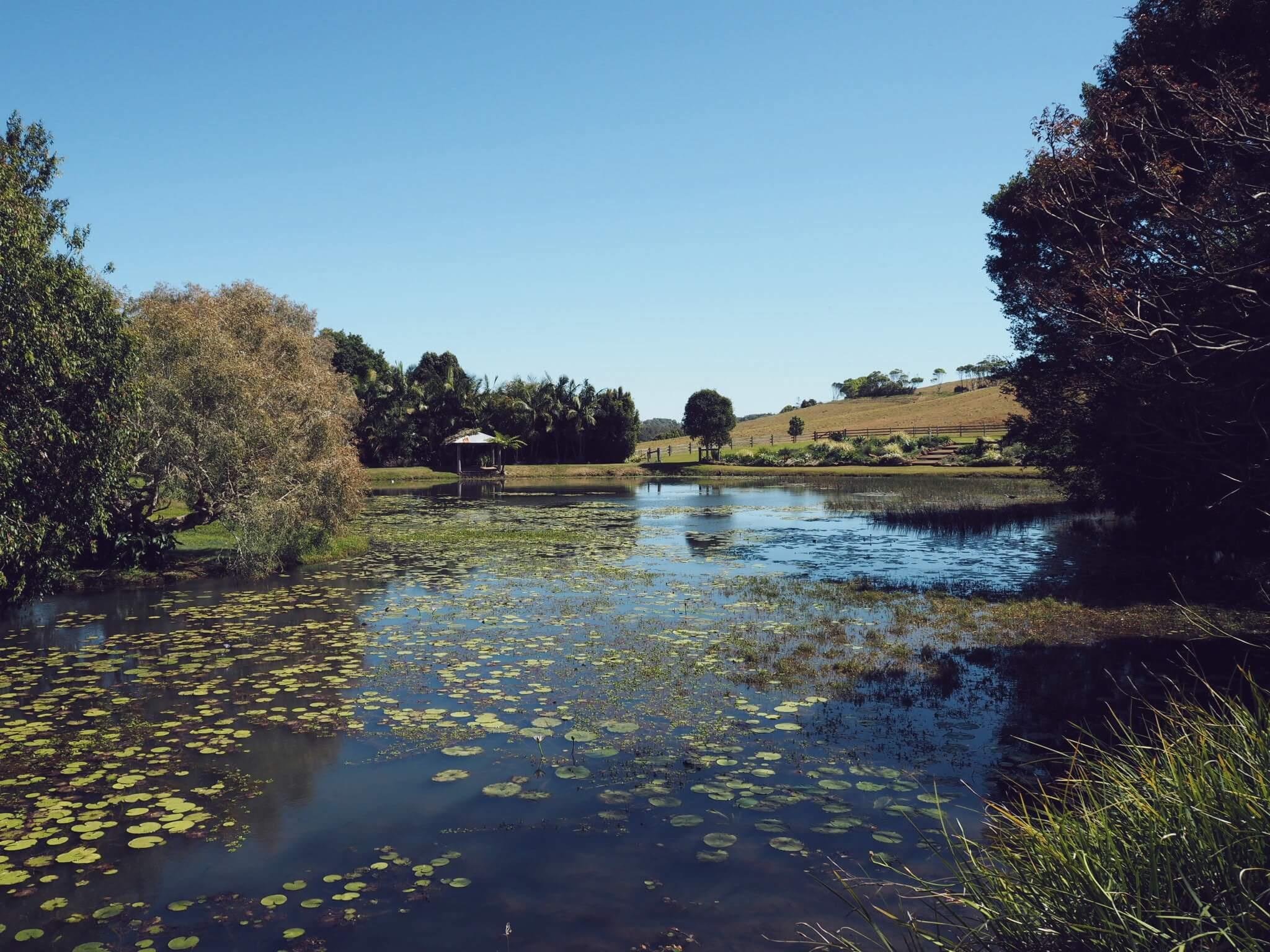 byron bay hinterland