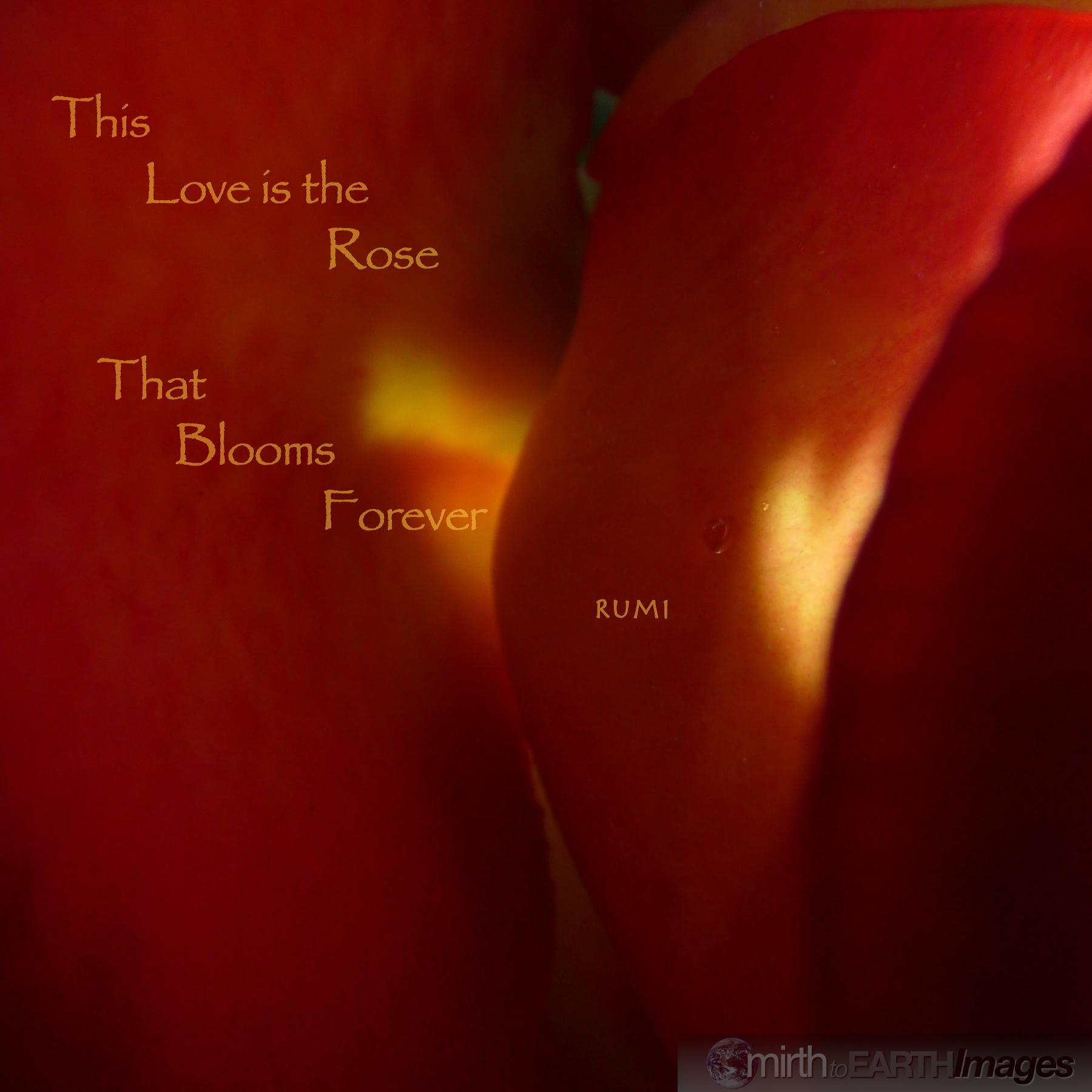 10x10 This Love.jpg