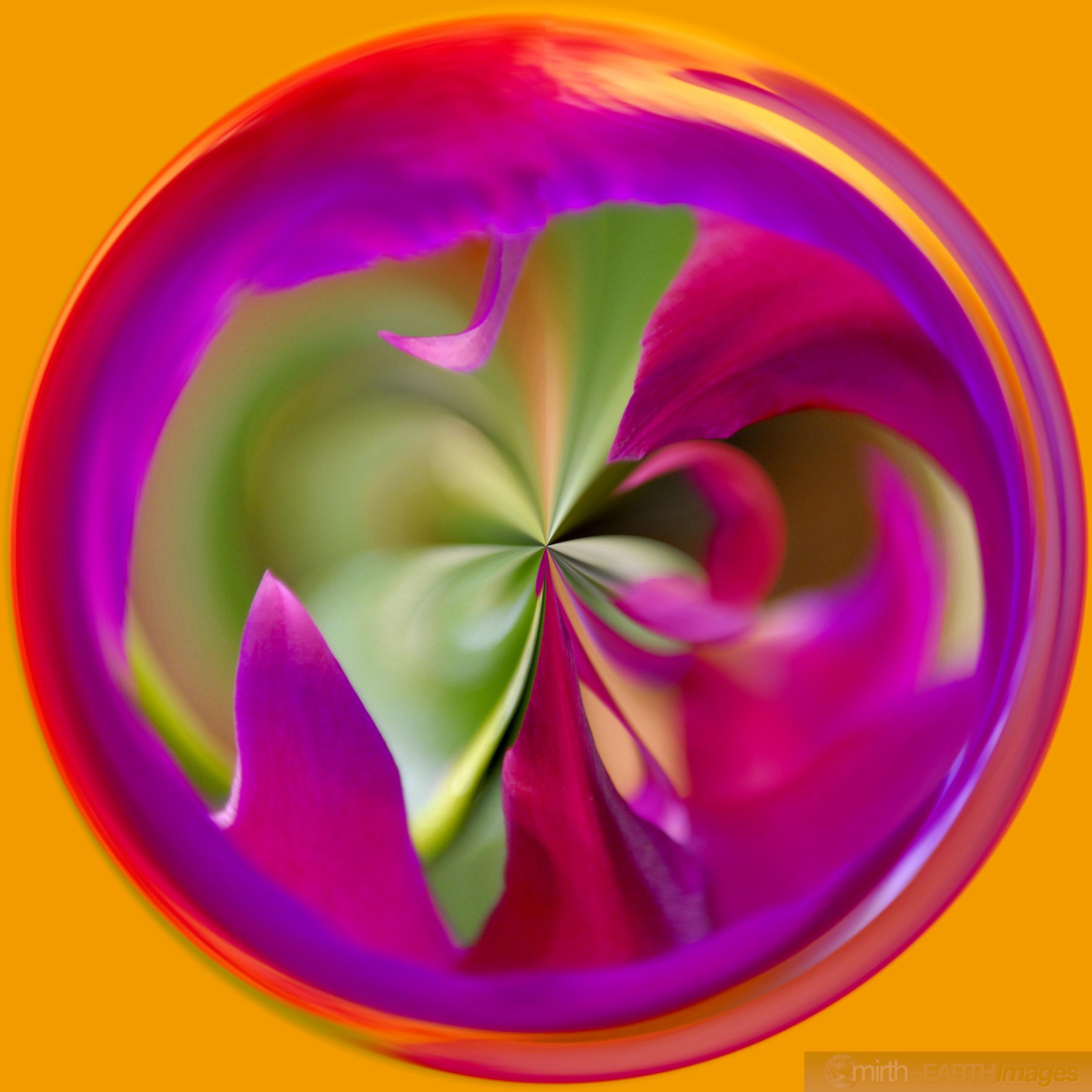 Orchid Orb4480.jpg