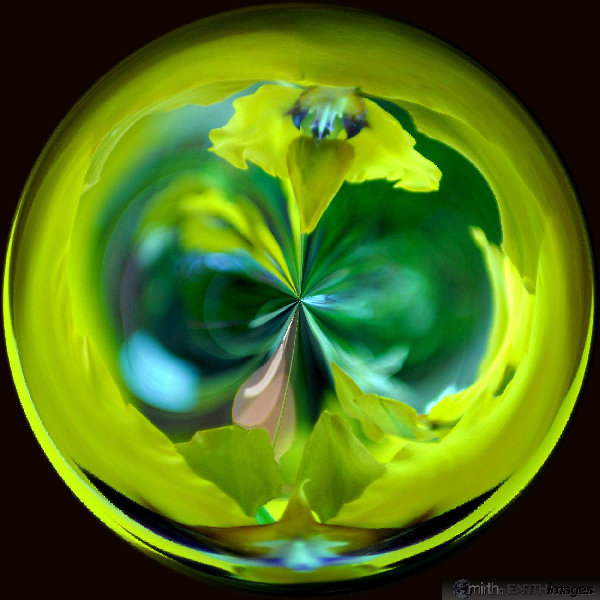 Orchid Orb4576.jpg