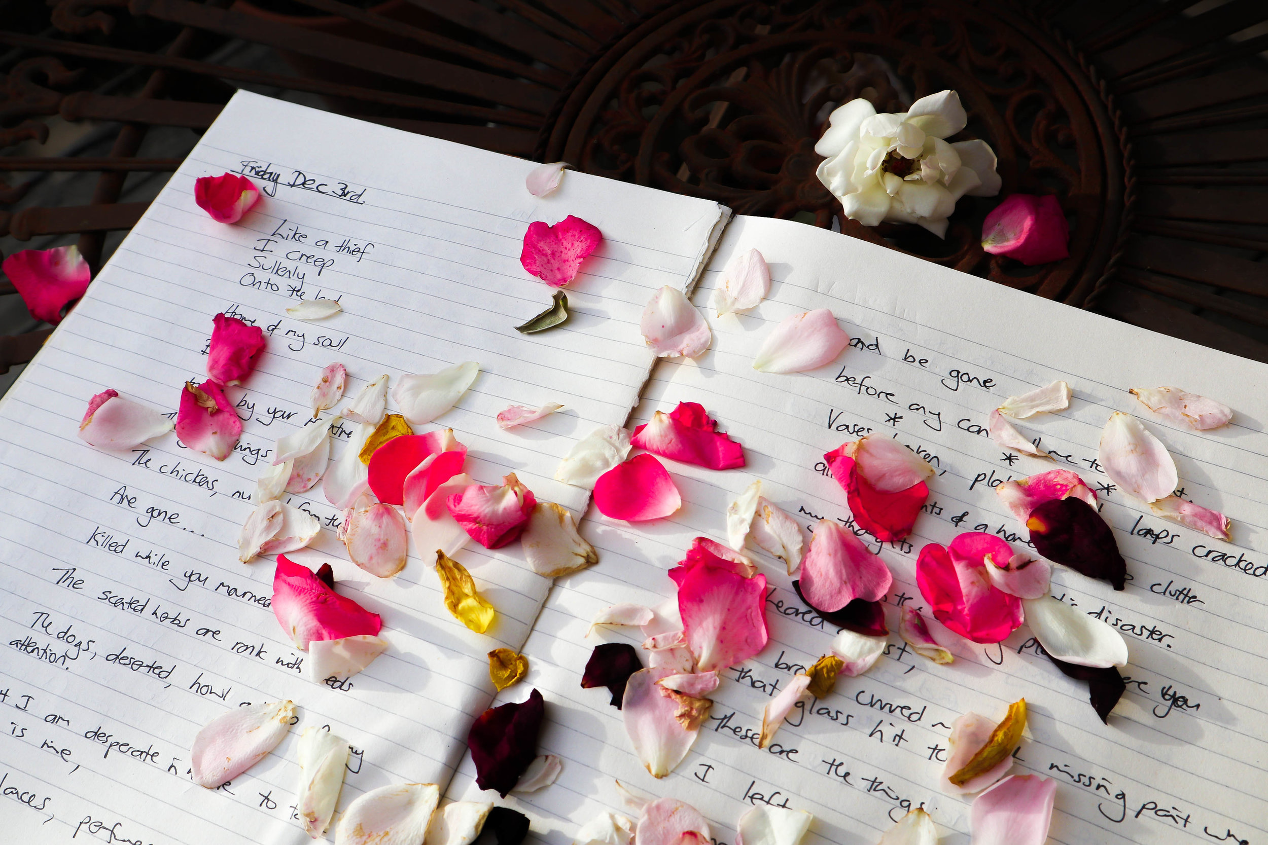 petals on notebook 1.jpg