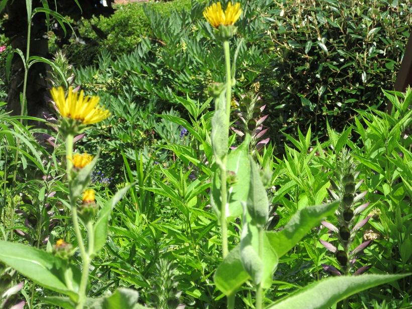 Tracey - yellow flowers.jpg