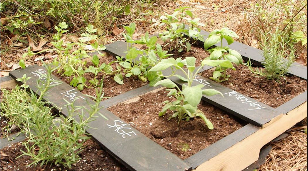A low-cost herb garden idea