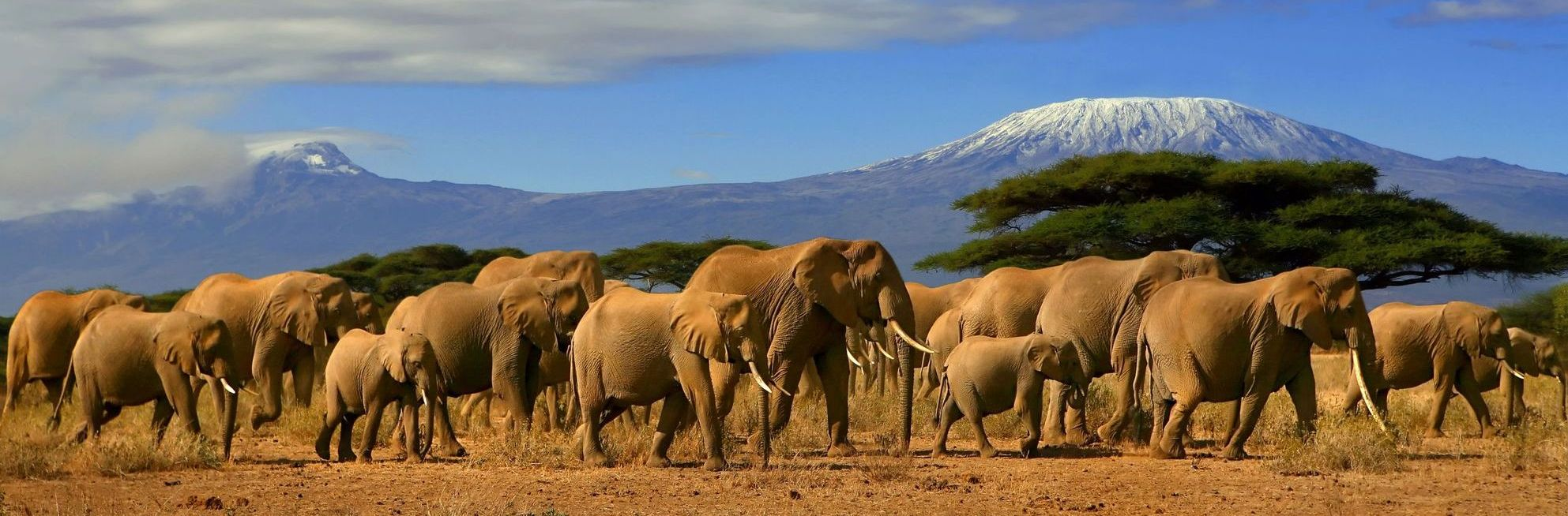 Kenya Safari Africa Zanzibar