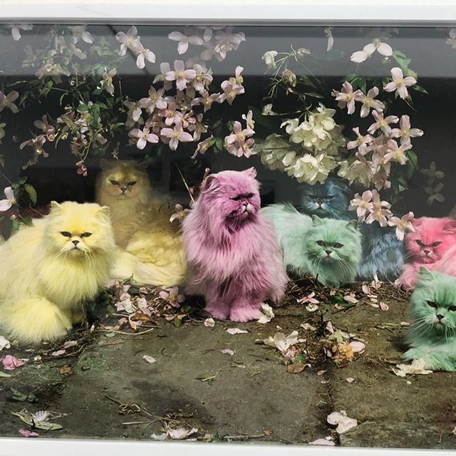 Miaow !! Tim Walker at the V&A .. inspirational, uplifting and pure genius #V&A#timwalker #colour