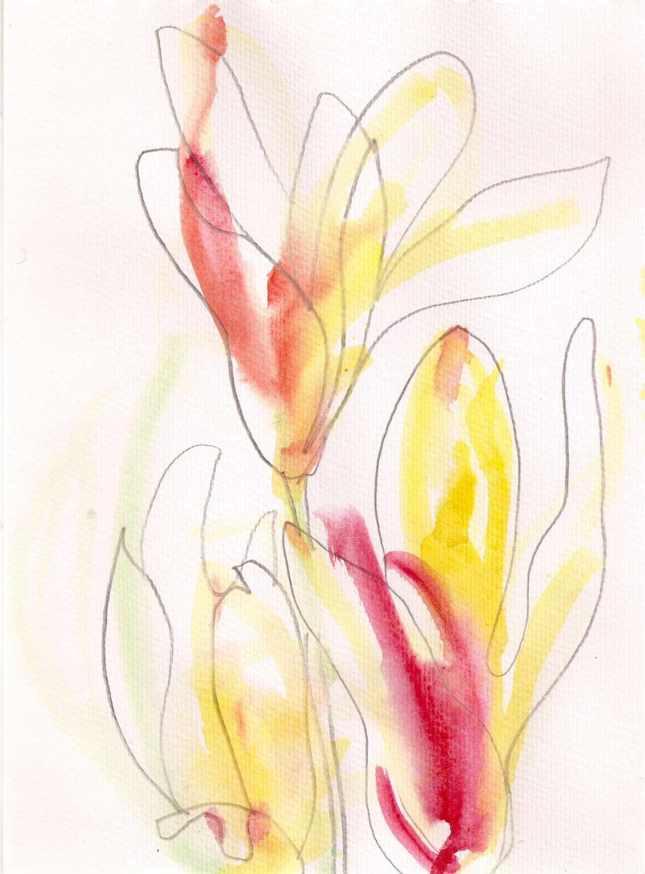 """Spring flowers - tulips. """"You can cut all the flowers but you cannot keep Spring from coming."""" Pablo Neruda March 2016"""