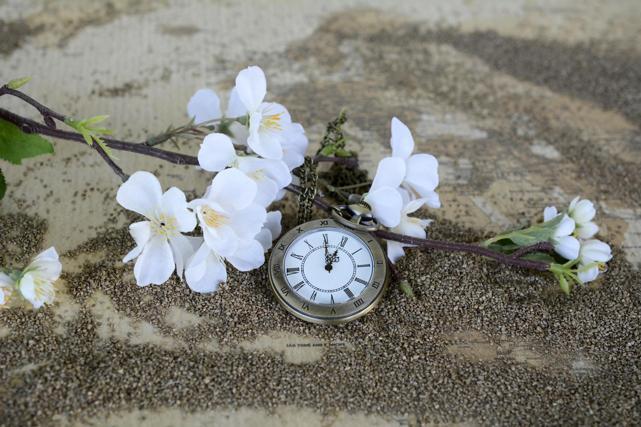 sand-blossom-plant-white-antique-leaf-510890-pxhere.com.jpg