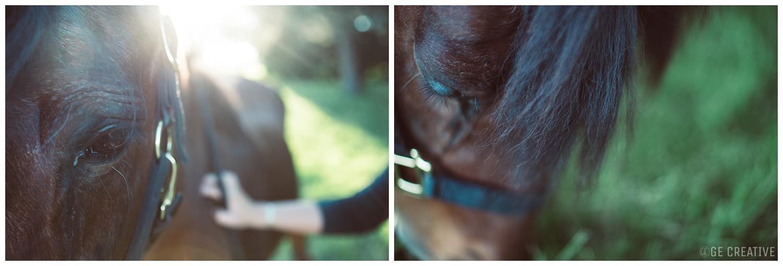 HorseMemorialSession_0019.jpg