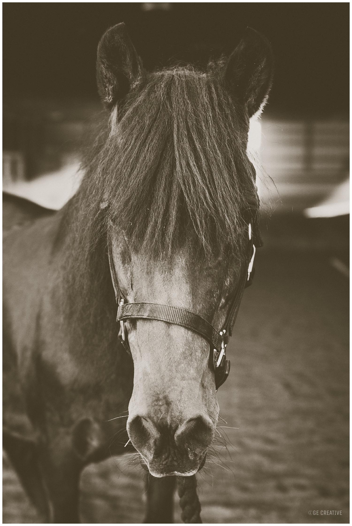 HorseMemorialSession_0020.jpg