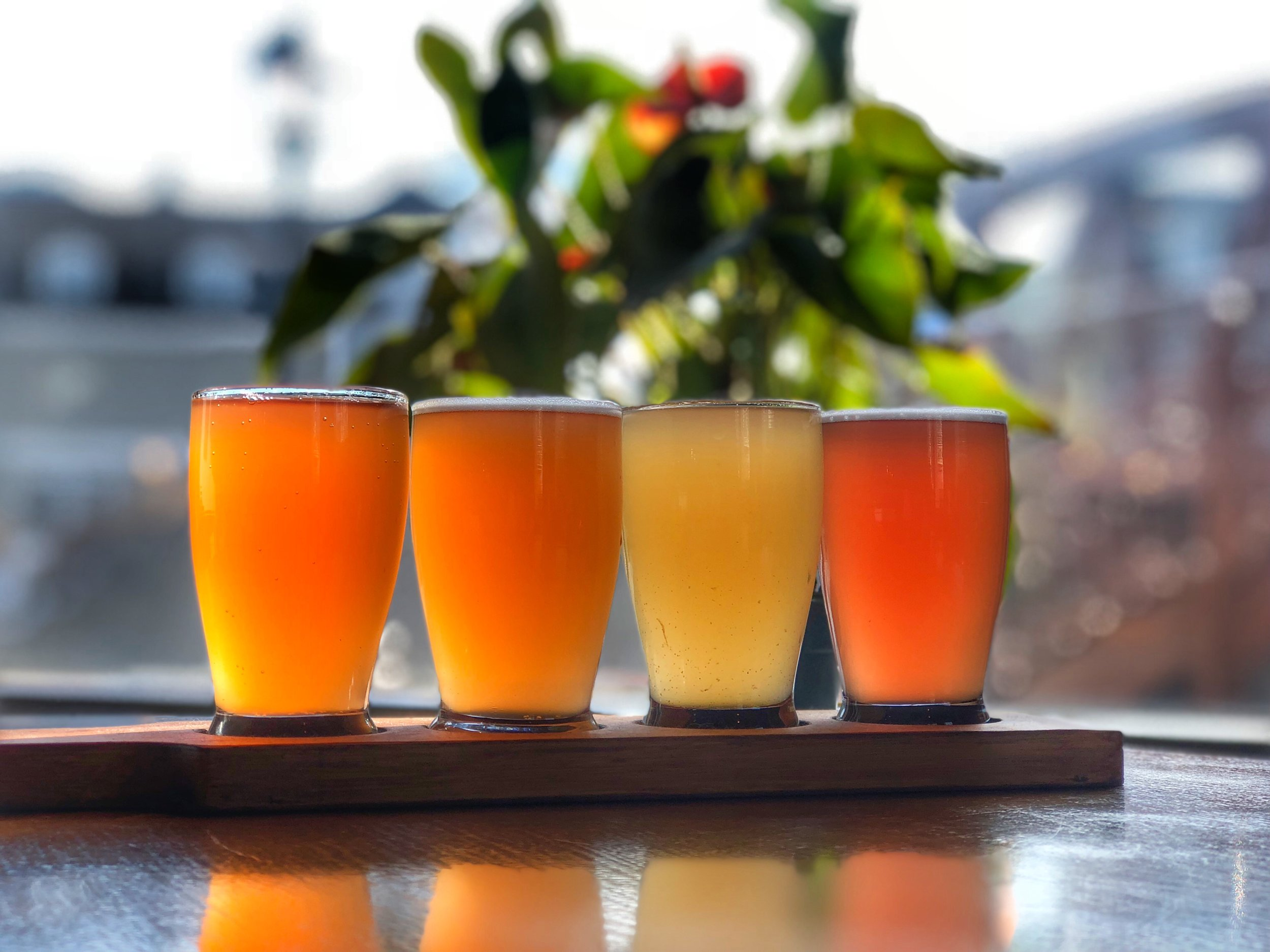 kombucha flight.jpg