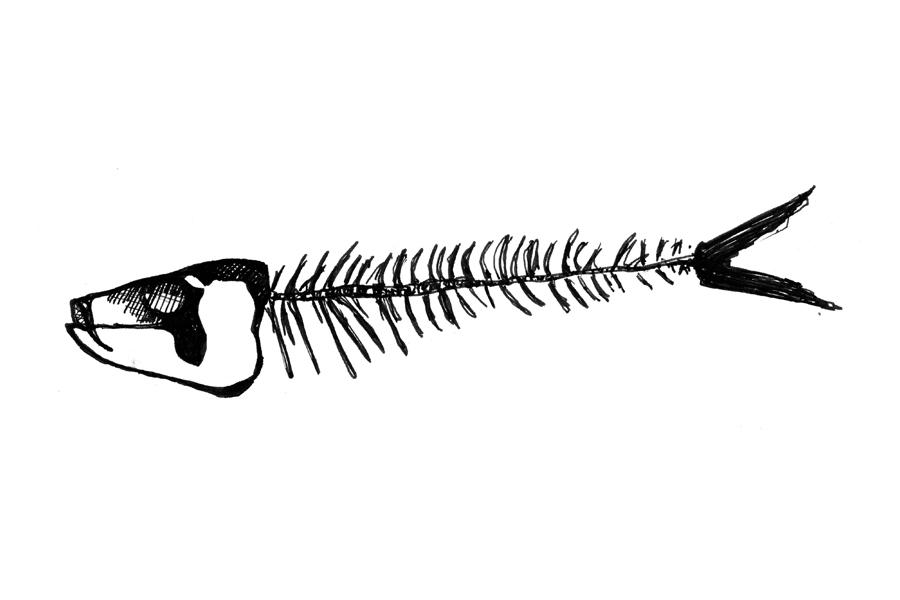 FISH-SKEL.jpg