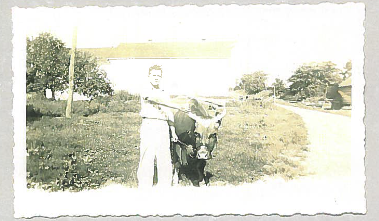 Harry Friedman with a cow on the family farm in the 1940's.