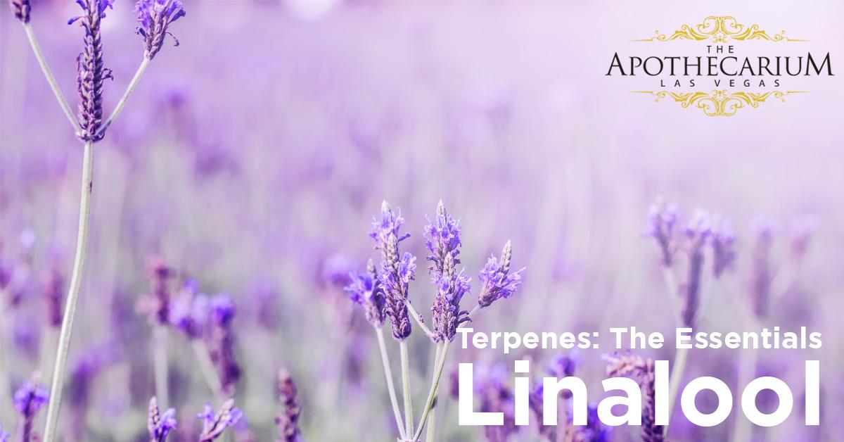 the apothecarium a recreational and medical cannabis dispensary discuss the basics of linalool