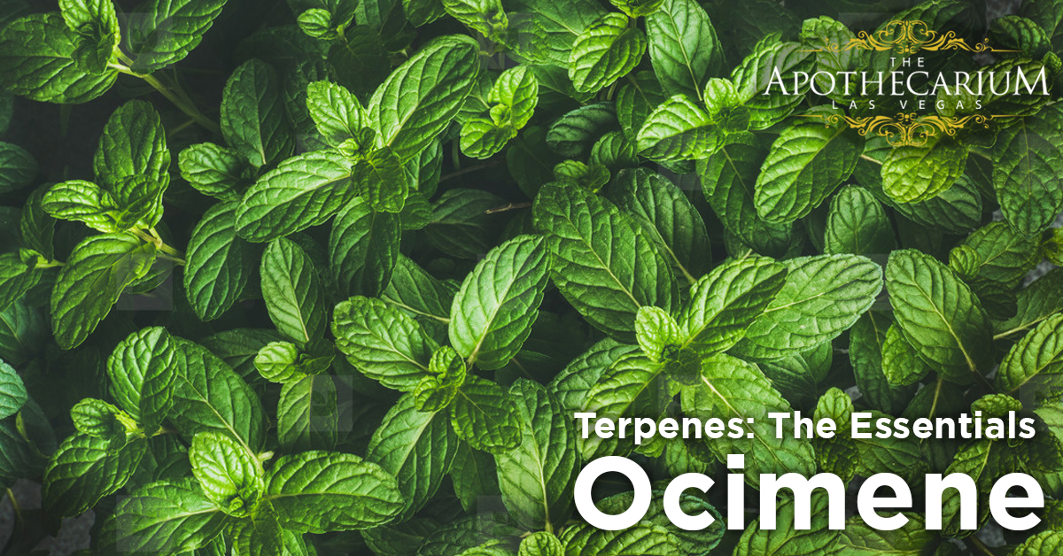 the apothecarium las vegas a recreational and medical cannabis dispensary discuss ocimene a terpene found in marijuana