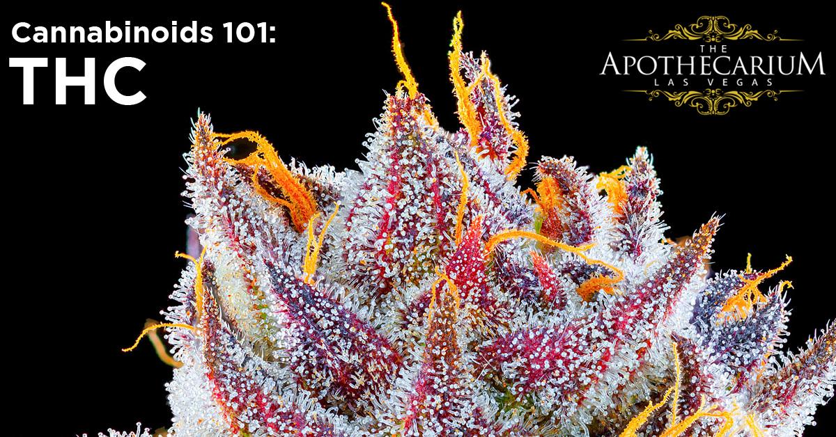 the apothecarium las vegas a recreational and medical marijuana dispensary discuss thc a cannabinoid